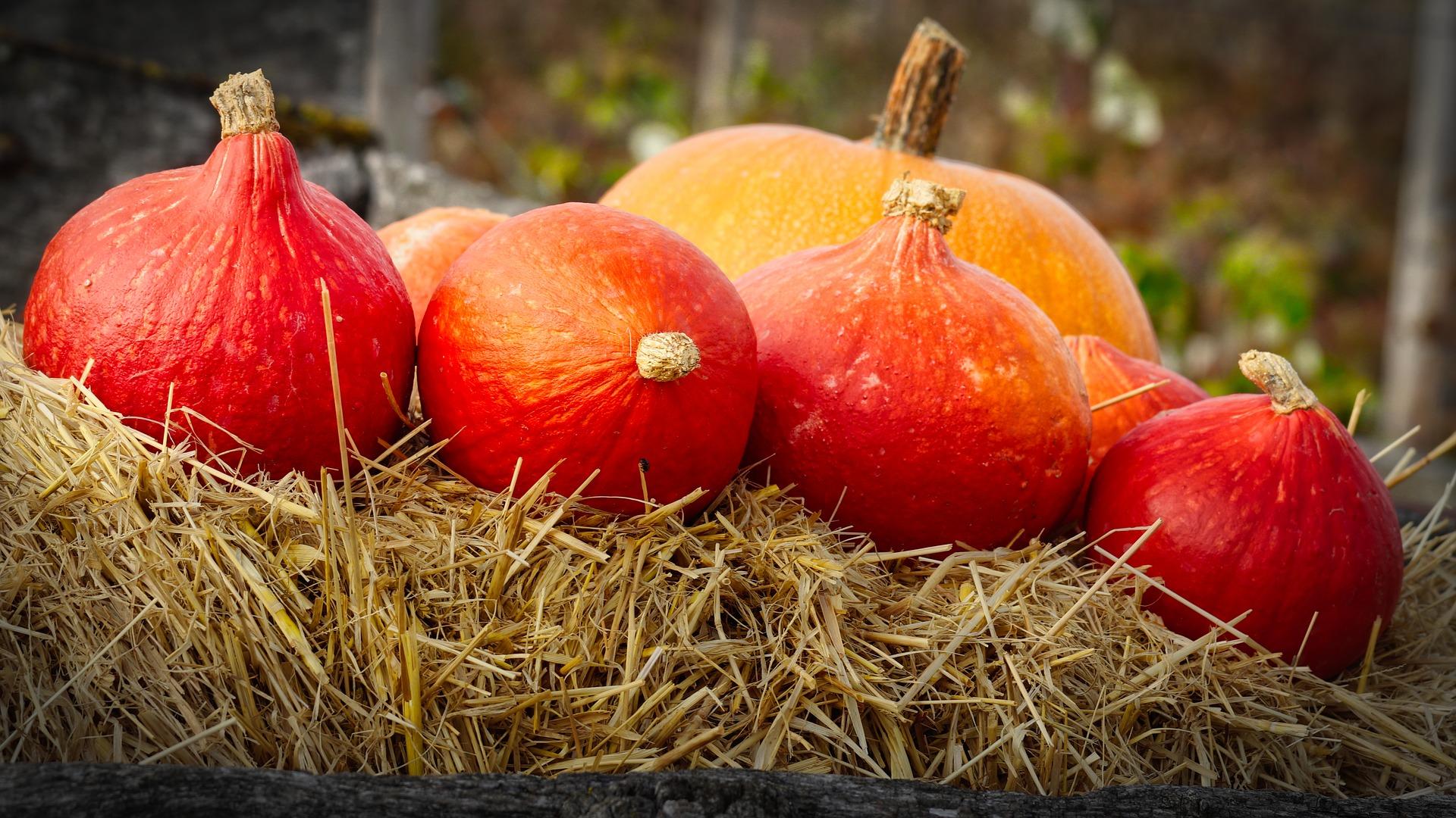 pumpkins-3731497_1920