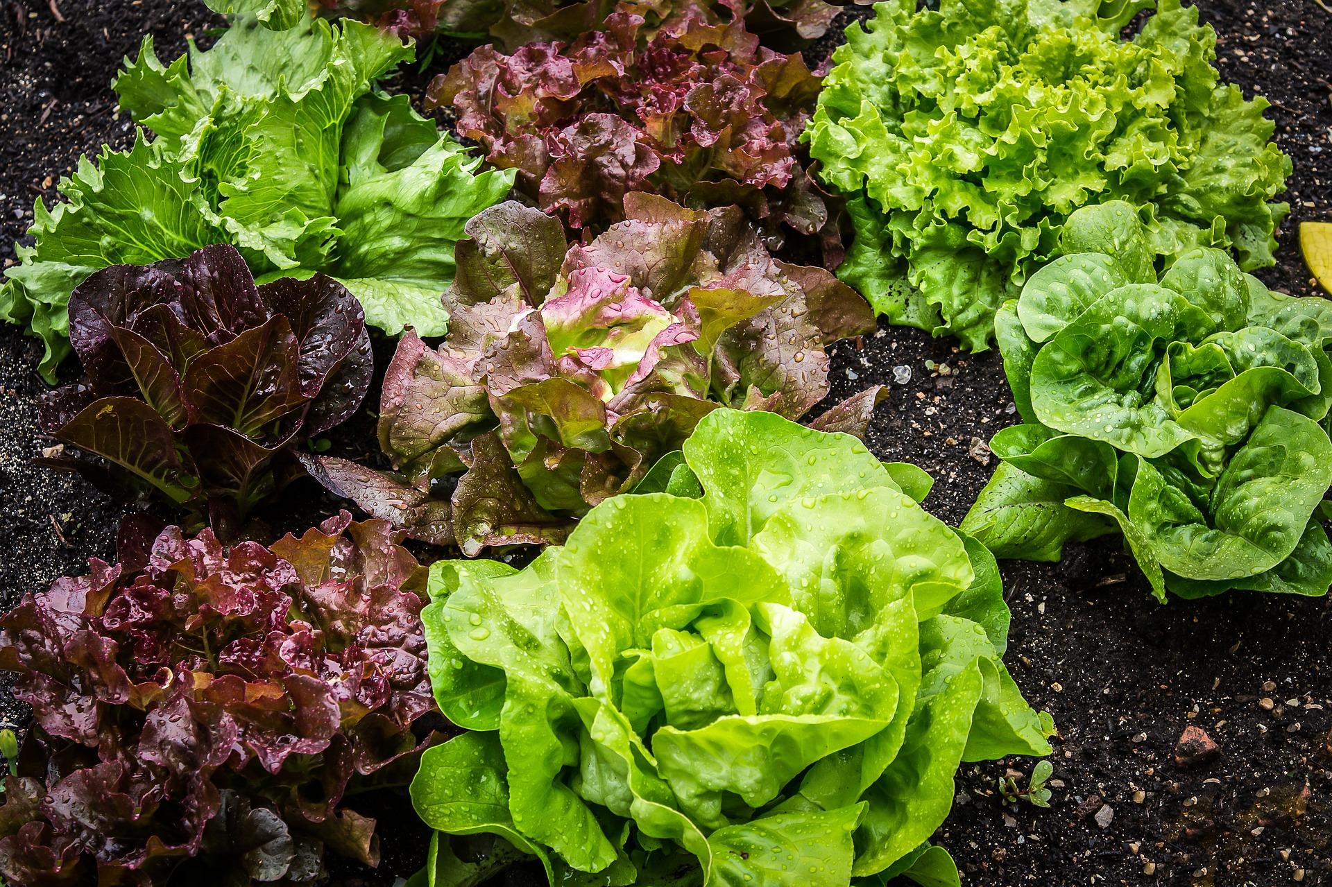 salad-2376777_1920