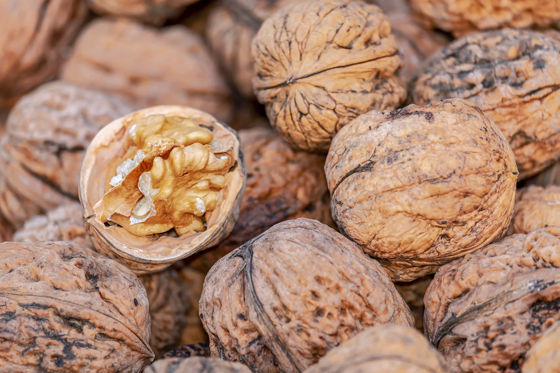 nuts-4062624_1920